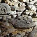 Una visita al museo di San Valentino alla scoperta dei fossili e delle ambre
