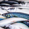 Fish in September: Which to buy?