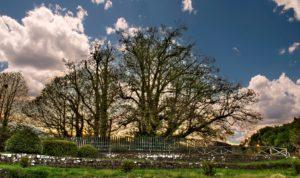 albero-piu-vecchio