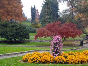 foliage-torino