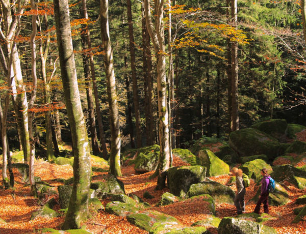 November 21st is National Tree Day: the most beautiful woods in Italy