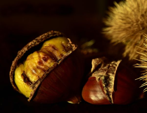 Where to gather chestnuts and the best fairs in Italy