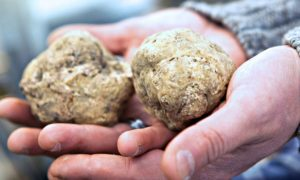 Truffle producers in Italy