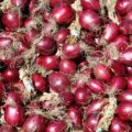 The red onion of Tropea: Italian Charme