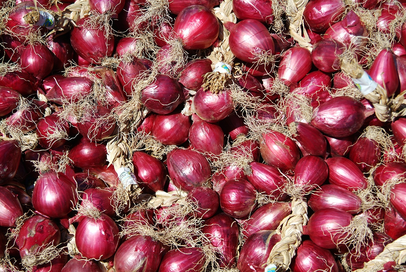 Culture De L Oignon Rouge l'oignon rouge de tropea: le charme fait avec l'oignon
