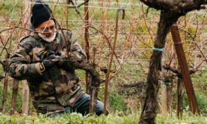 The Pruning Festival in Erbusco