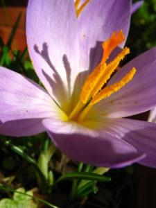 flora-italia