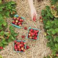 May in Italy is the month of strawberries