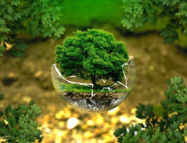 Giornata mondiale dell'ambiente 2019: ecco quando si svolge